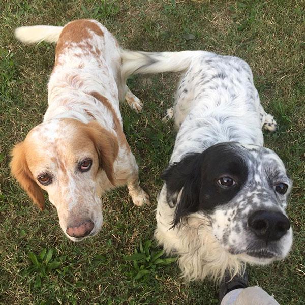 consulenze per la scelta del cane adatto