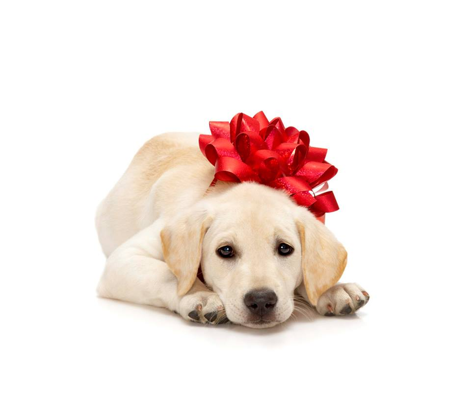 cane regalo